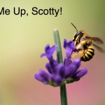 bee, bee pollen, vitamin B, Scotty, star trek, cacao, chocolate, raw, raw food, recipe, health, wellness, holistic