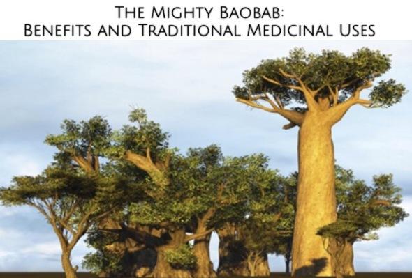 baobab, super food, fruit, mighty, mighty baobab, baobab benefits, baobab medicine, traditional, traditional medicine, baobab traditional medicine